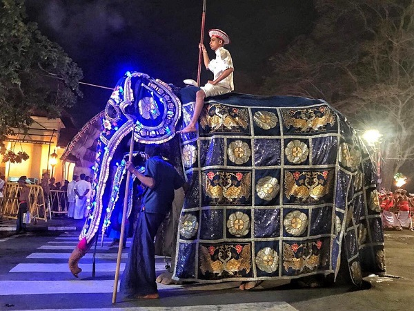 Cô voi tikiri tại một lễ hội ở Srilanka