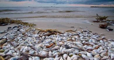 Ô nhiễm môi trường biển là gì mà sinh vật biển lại chết