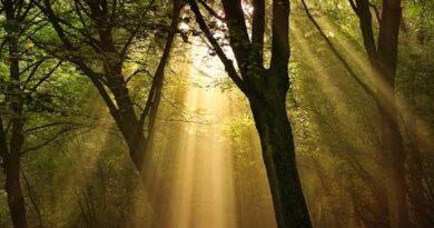 Mục tiêu phát triển rừng của Bách Hóa Môi Trường
